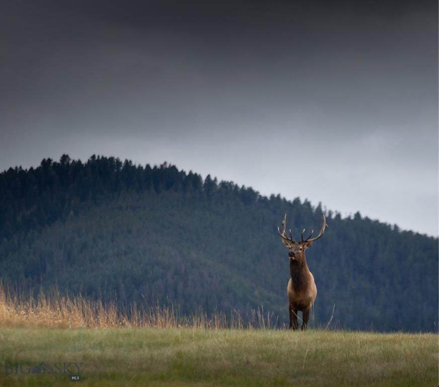 https://bt-photos.global.ssl.fastly.net/montana/orig_boomver_1_352392-2.jpg