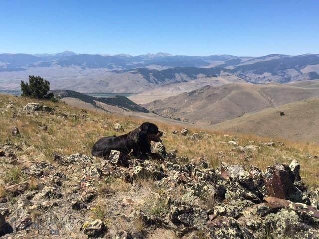 TBD Soap Gulch Road, Melrose, MT 59743 (MLS #364080) :: Montana Mountain Home, LLC