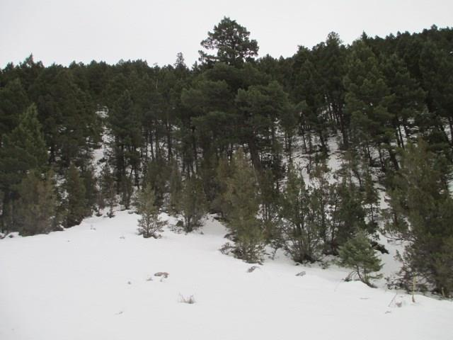 Tract 380 Pole Gulch, Three Forks, MT 59752 (MLS #310745) :: Black Diamond Montana