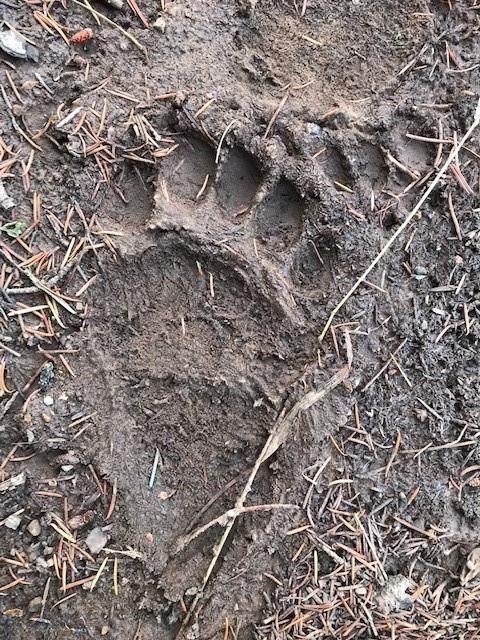 nkn Bear Tracks Road - Photo 1