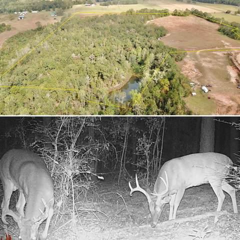 36.5 Acres County Road 294, Columbia, AL 36319 (MLS #482379) :: Buck Realty