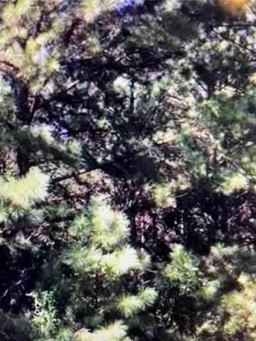 20 Plantation Pines, Tallassee, AL 36078 (MLS #496687) :: David Kahn & Company Real Estate