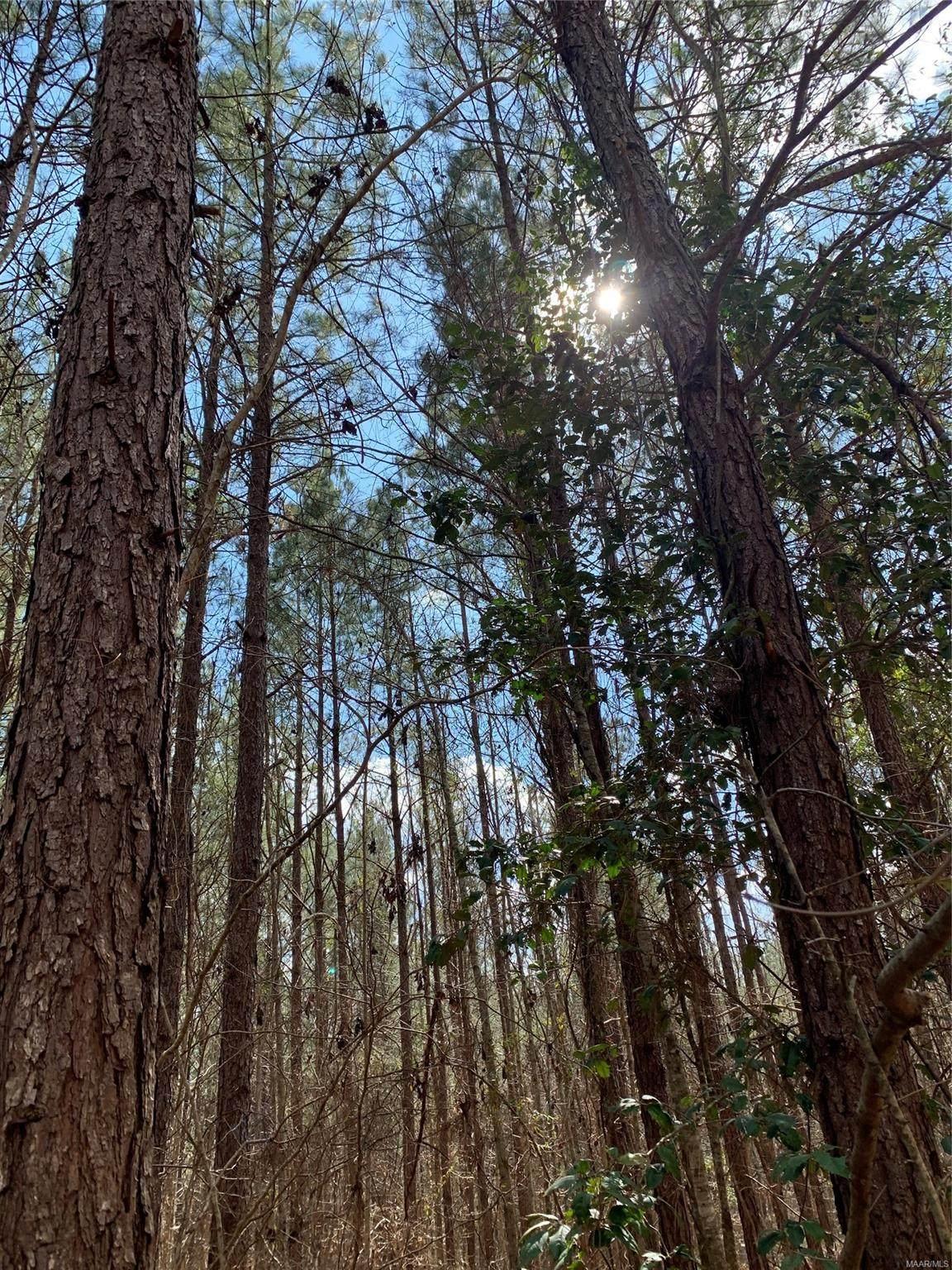 0 Honey Jones Creek Road - Photo 1