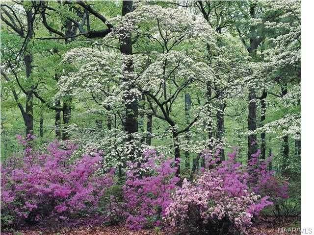 420 Plantation Crossing, Millbrook, AL 36054 (MLS #290500) :: LocAL Realty