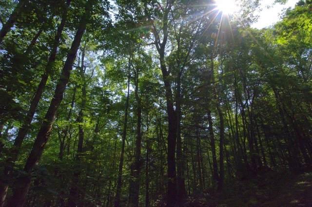 L-50 Snowbird Trail, ROBBINSVILLE, NC 28771 (MLS #129691) :: Old Town Brokers