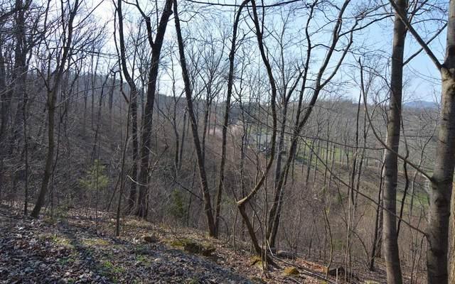 Lot 14 Deer Valley, WARNE, NC 28909 (MLS #131515) :: Old Town Brokers