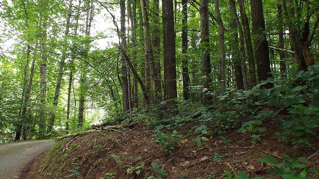 LOT 38 Riverview Road, ROBBINSVILLE, NC 28771 (MLS #132440) :: Old Town Brokers