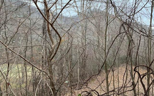 Lot 10 High Meadows, HAYESVILLE, NC 28904 (MLS #133704) :: Old Town Brokers