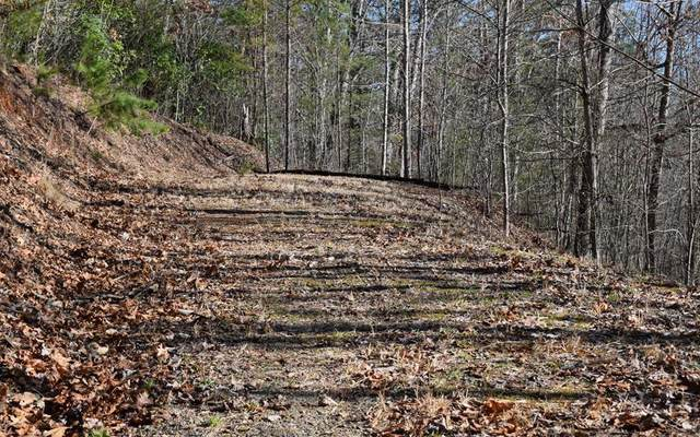 Lot 13 The Springs, HAYESVILLE, NC 28904 (MLS #133862) :: Old Town Brokers