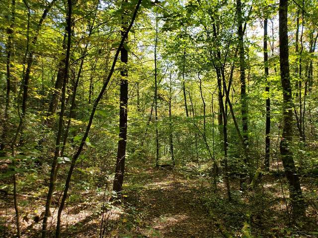 41.50 AC Alf Branch Drive, MARBLE, NC 28905 (MLS #136343) :: Old Town Brokers