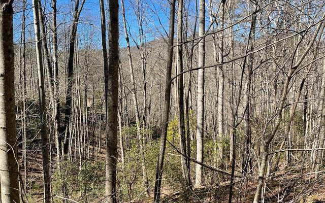 Lot 16E Soapstone, HIAWASSEE, GA 30546 (MLS #137545) :: Old Town Brokers