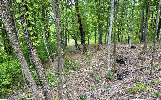 Lot 17M Mtn Harbour, HAYESVILLE, NC 28904 (MLS #138039) :: Old Town Brokers