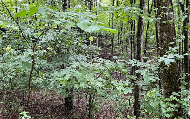 Lot 45AC Mountain Harbour, HAYESVILLE, NC 28904 (MLS #138531) :: Old Town Brokers