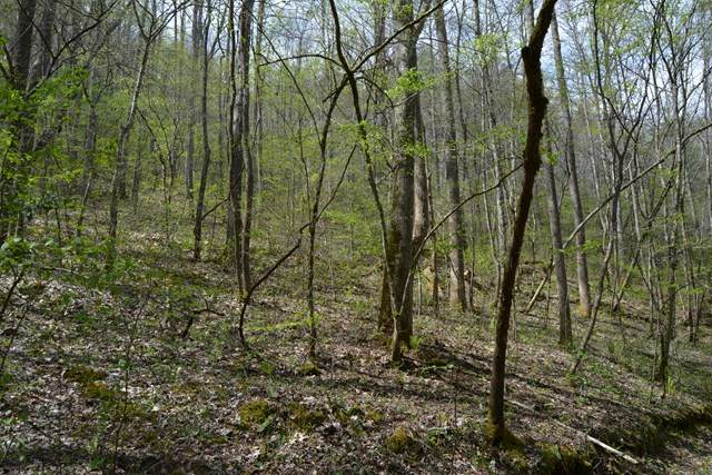 100 Wallace Ridge Trail - Photo 1