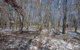 Lot 3 Penlands Indian Trail - Photo 5