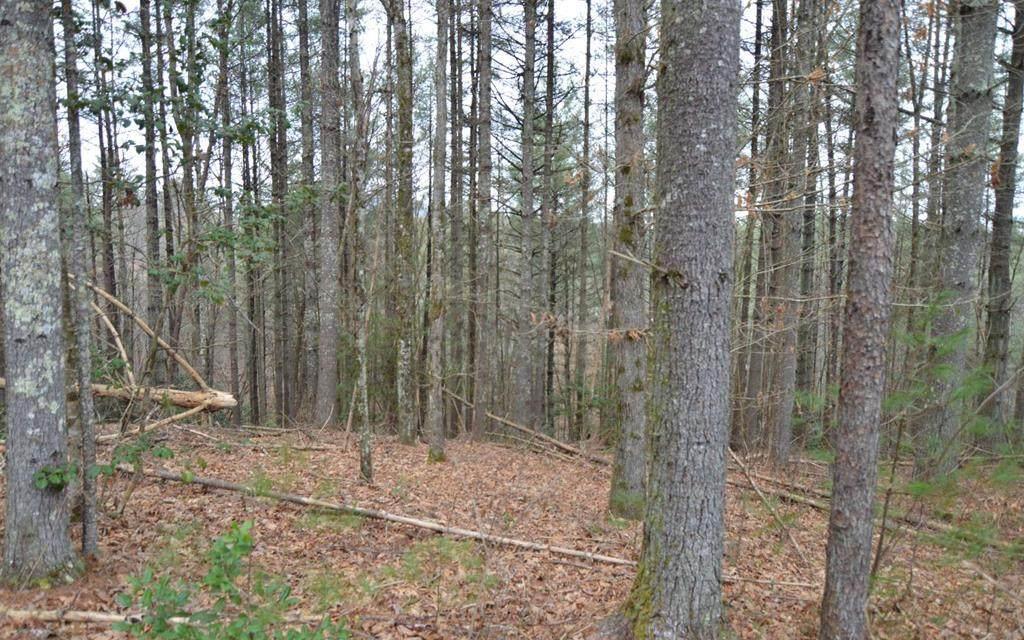 Lot 5 Shady Oaks-Mouse Creek Trail - Photo 1