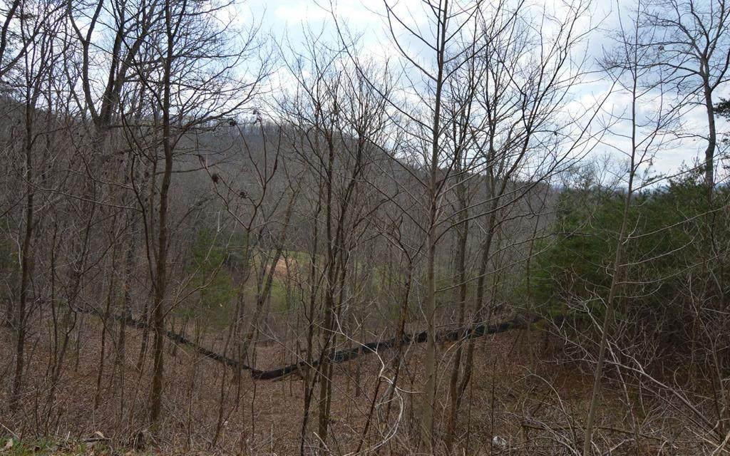 Lot 11 Deer Valley - Photo 1