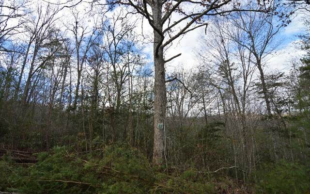 Lot 48 Laurel Brook - Photo 1
