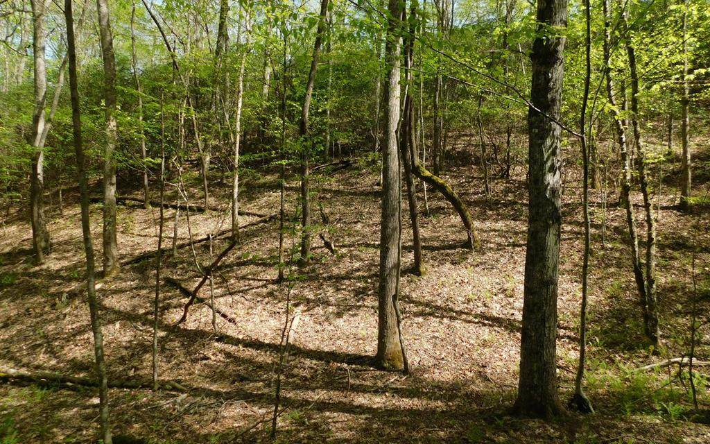 Lot 14 Deer Trace - Photo 1