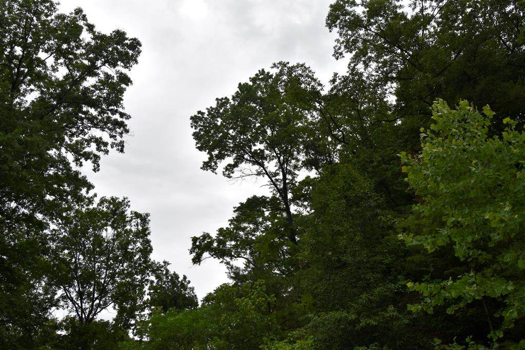 LT 15 Smoky Mountain Ridge - Photo 1