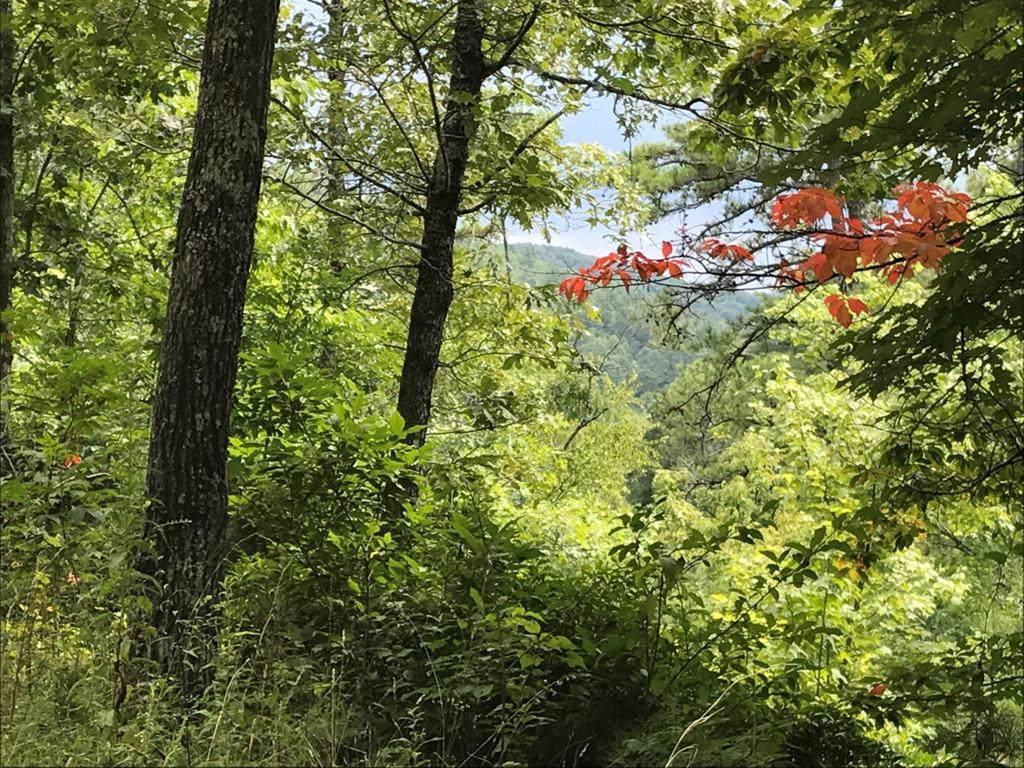 Lt4&5 Stone Creek - Photo 1