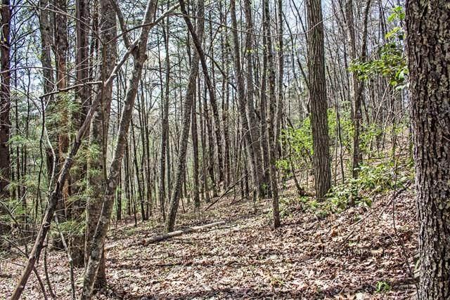 23 Quail Run Ridge - Photo 1