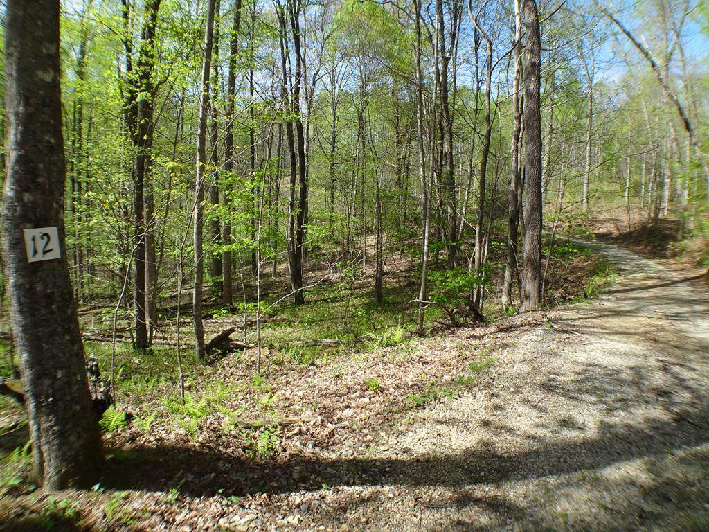 Lot #12 Deweese Rd - Photo 1