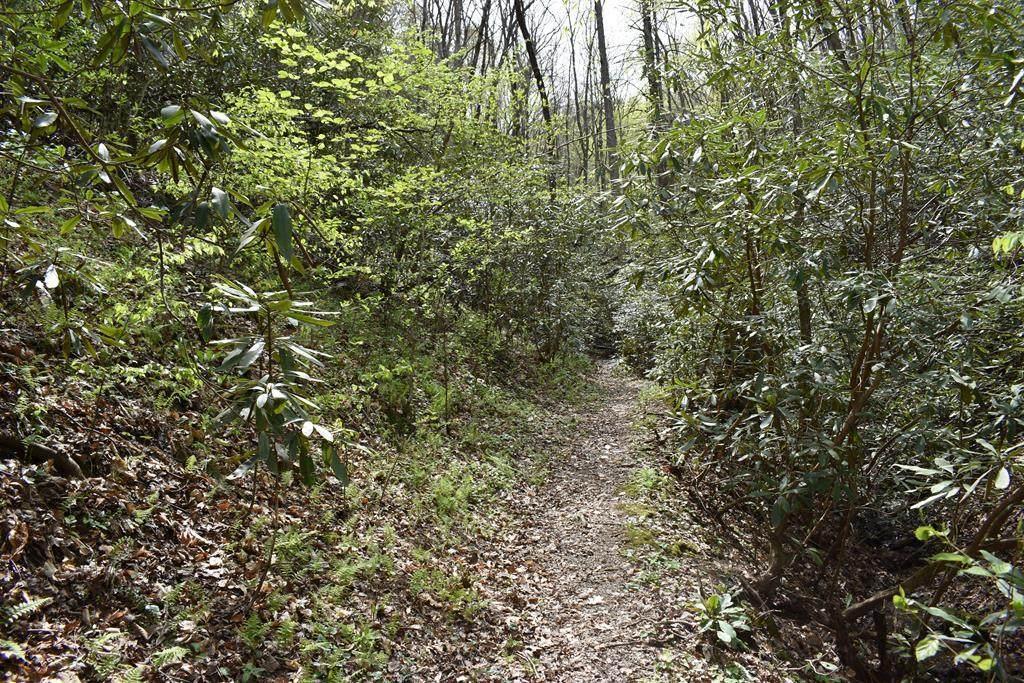 93 Caribou Lane - Photo 1