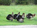 280 County Road 2360E - Photo 109
