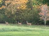 Lot 16 Deer Pond Drive - Photo 15