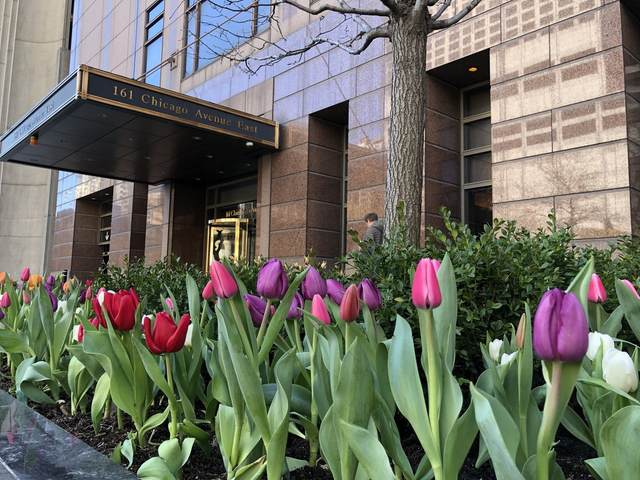 161 E Chicago Avenue 38DE, Chicago, IL 60611 (MLS #10642430) :: BN Homes Group