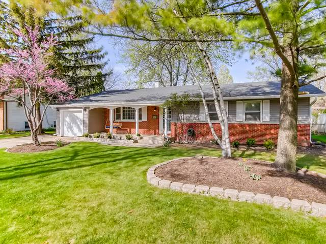 242 N Cady Drive, Palatine, IL 60074 (MLS #11069742) :: Helen Oliveri Real Estate