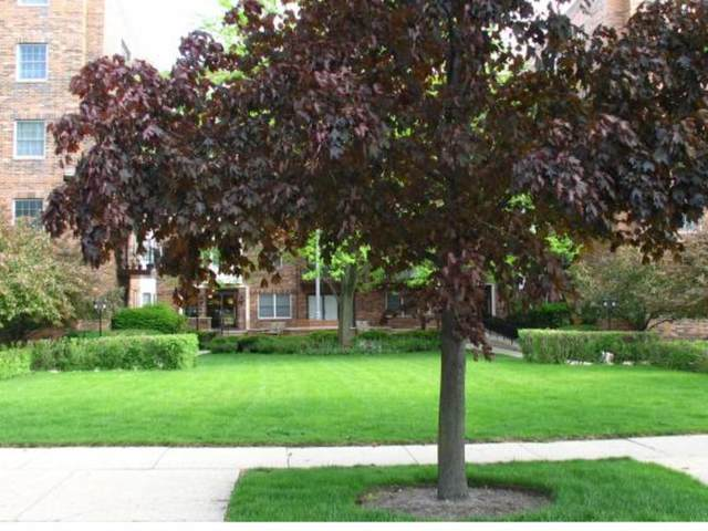 1501 Oak Avenue #203, Evanston, IL 60201 (MLS #11223156) :: Lewke Partners - Keller Williams Success Realty