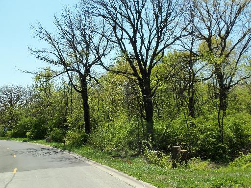 LOT #6 Thomas Drive, Morris, IL 60450 (MLS #08806714) :: Domain Realty