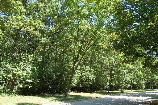 1960 Windridge Drive, Lake Forest, IL 60045 (MLS #09121295) :: Baz Realty Network | Keller Williams Preferred Realty
