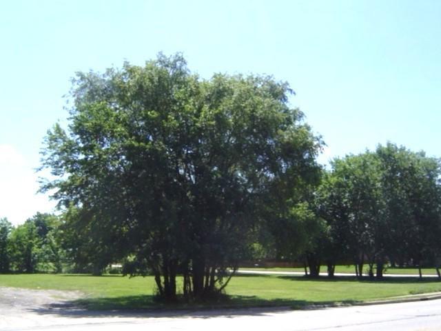 611 S Maplewood Drive, Rantoul, IL 61866 (MLS #09487142) :: Century 21 Affiliated