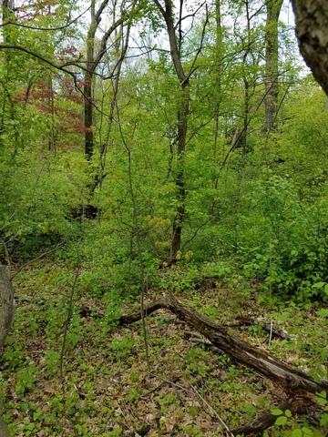 Lot 1 Oak Street, Twin Lakes, WI 53181 (MLS #09625068) :: The Perotti Group | Compass Real Estate