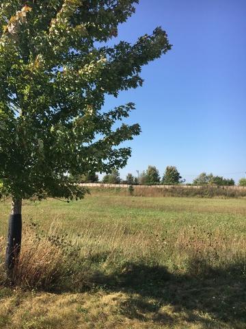 27384 Junegrass Drive - Photo 1