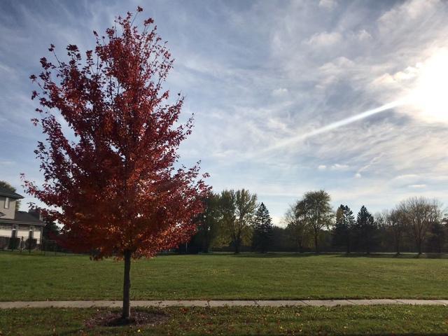 1106 Green Glen Court, New Lenox, IL 60451 (MLS #09793987) :: Baz Realty Network | Keller Williams Preferred Realty