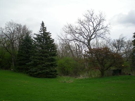 12S355 Lemont Road, Lemont, IL 60439 (MLS #09803657) :: The Wexler Group at Keller Williams Preferred Realty