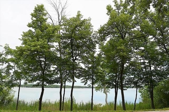 Lt 1 Silver Lake Road, Salem, WI 53168 (MLS #09828334) :: Littlefield Group