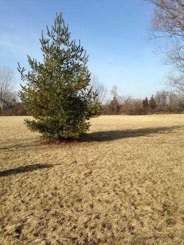 Lot 3 Pheasant Drive, Lakewood, IL 60014 (MLS #09835633) :: Lewke Partners