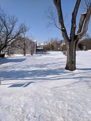 1346 N Portage Avenue, Palatine, IL 60067 (MLS #09859245) :: Helen Oliveri Real Estate
