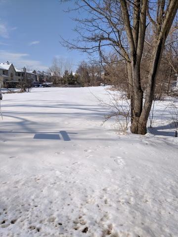 1328 N Portage Avenue, Palatine, IL 60067 (MLS #09859256) :: Helen Oliveri Real Estate