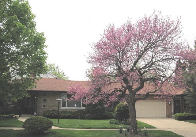36 S Cowley Road, Riverside, IL 60546 (MLS #09861795) :: Lewke Partners