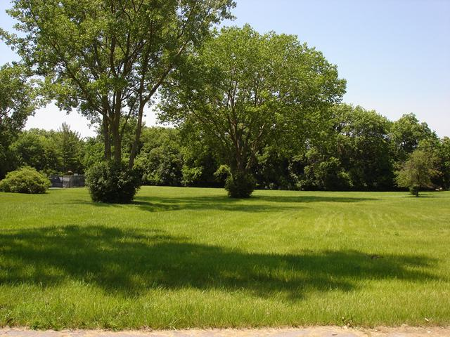 5108 Wolf Road, Western Springs, IL 60558 (MLS #09890152) :: Domain Realty