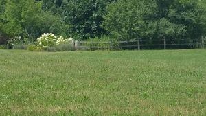 10 Springbrook Court, Algonquin, IL 60102 (MLS #09907017) :: Ryan Dallas Real Estate