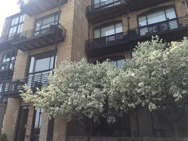 2614 N Clybourn Avenue #303, Chicago, IL 60614 (MLS #09960591) :: Property Consultants Realty