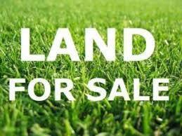 805 S Colfax Avenue, Elmhurst, IL 60126 (MLS #09994718) :: Ani Real Estate