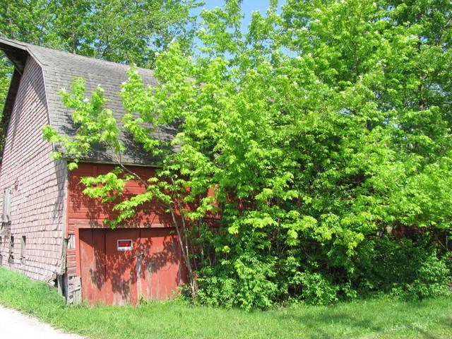 19704 W Munch Lane, Elwood, IL 60421 (MLS #10038887) :: Domain Realty